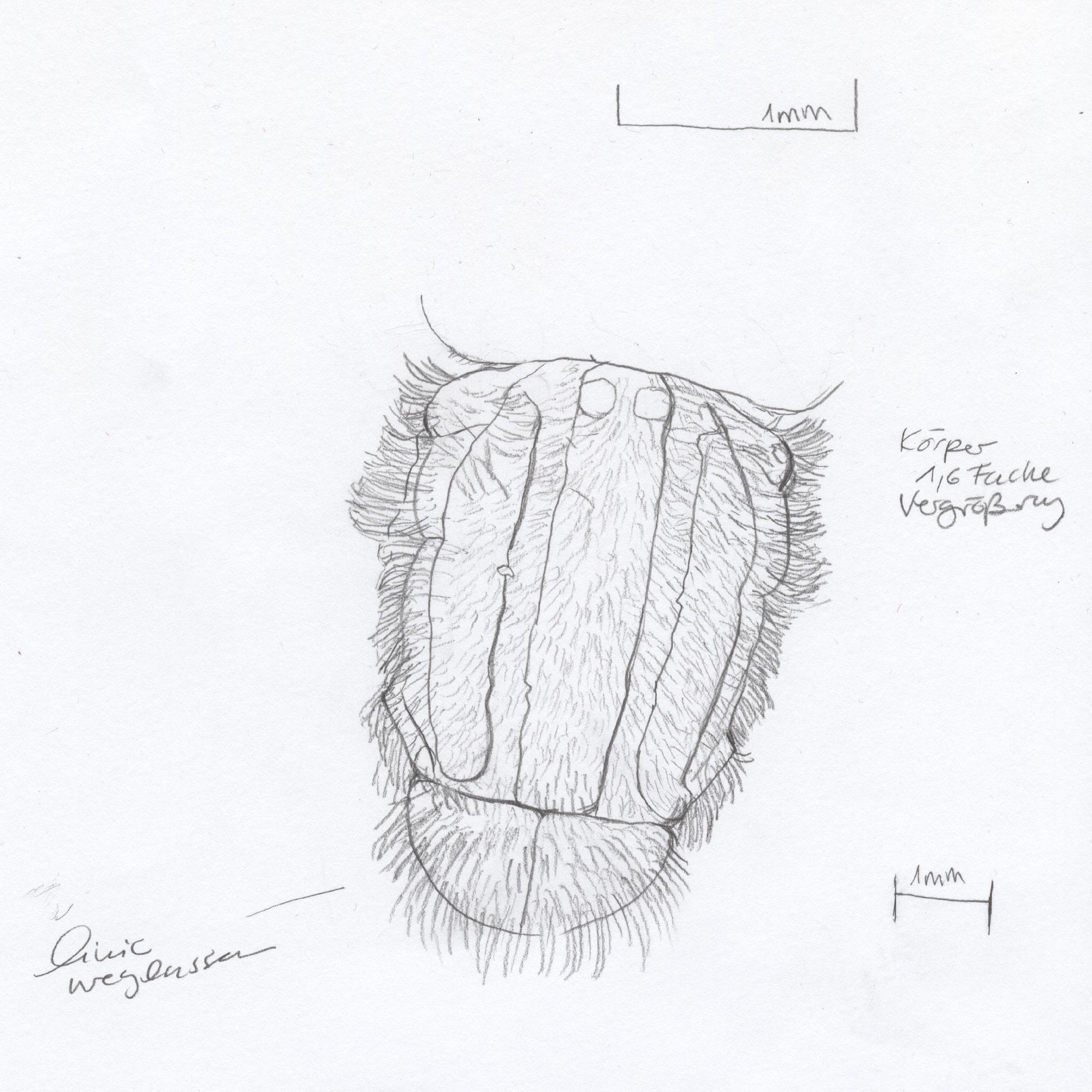 sketch 12